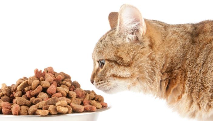 Alimentación para gatos domésticos.