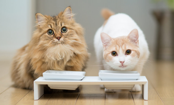 Alimentación de los gatos domésticos