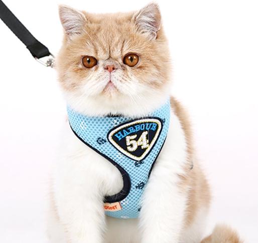 Accesorios para gatos domésticos.