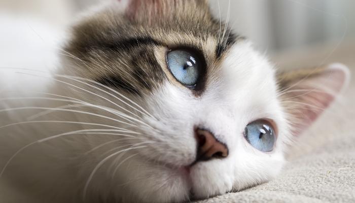 gatitos con poderes