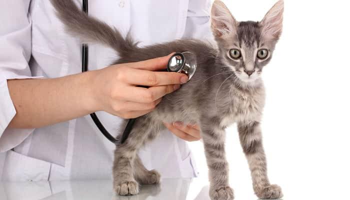 Consejos para cuidar a mi gato