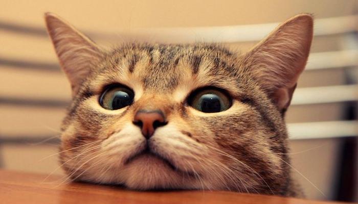 Gato juguetón