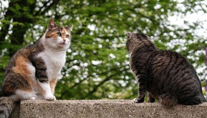Reproducción de los gatos