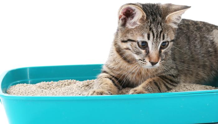 Bentonita para gatos