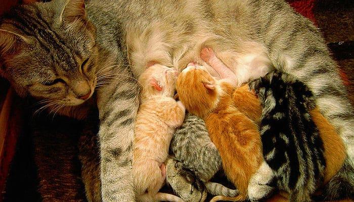 Gata parida con sus gatitos