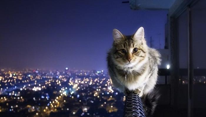 Gatos desde las alturas