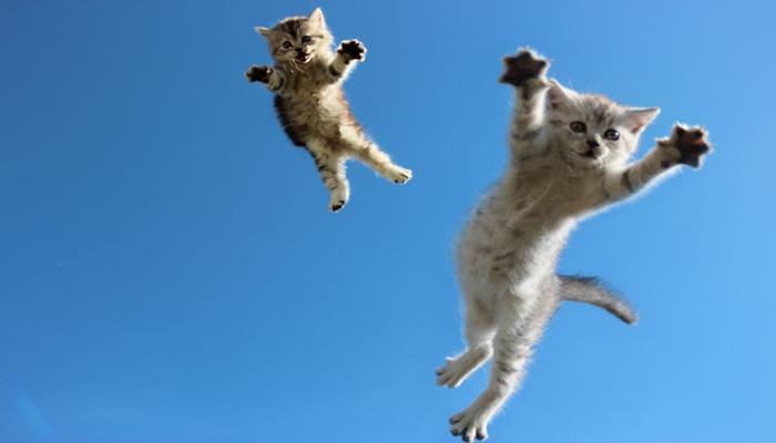 Gatos saltarines