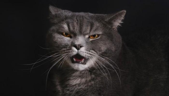 Gatitos molestos