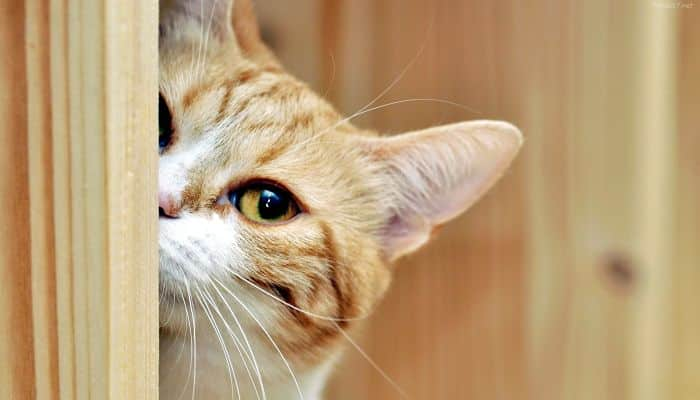 Gatitos curiosos