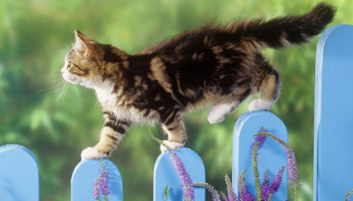 Equilibrio para los gatos