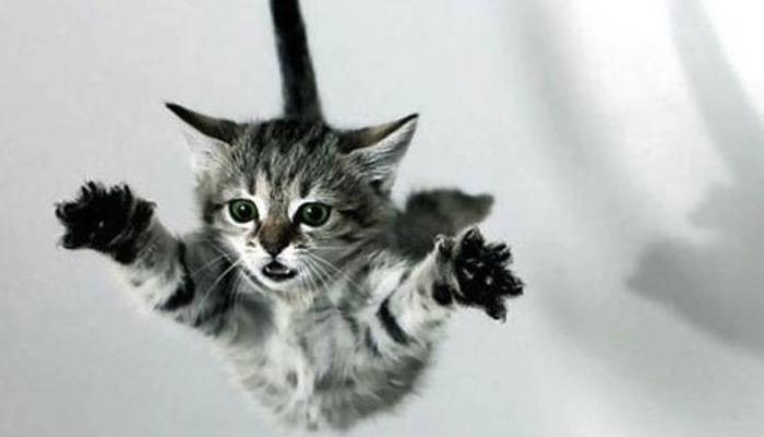 gatos ágiles