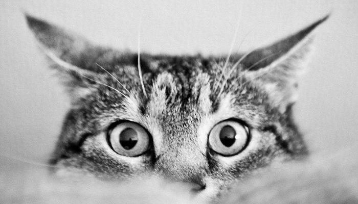 cuidados gatunos