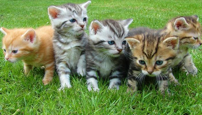 gatitos de distintos padres