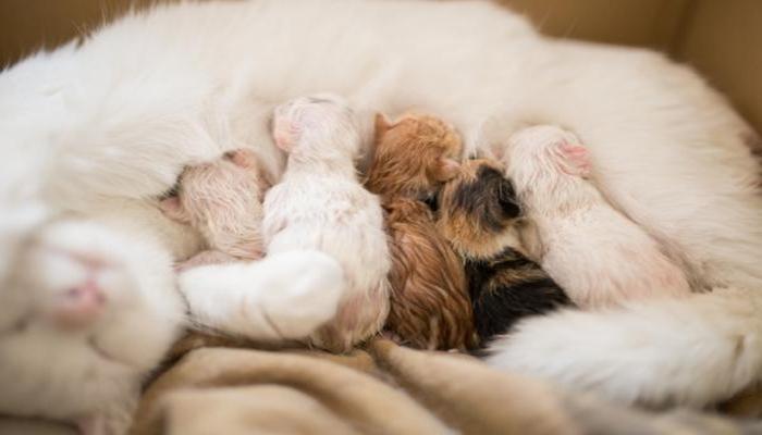 gata amamantando a sus crias