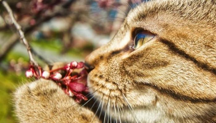 Olfato de gatos