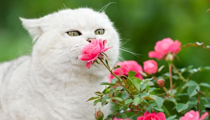 Gatitos olfateando