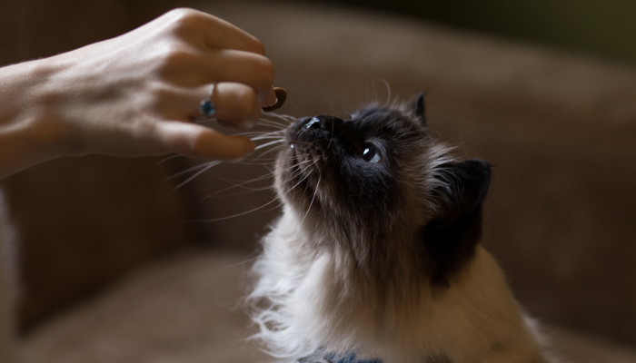 Olores agradables para gatos