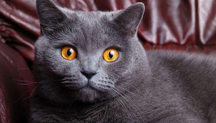 Curiosidades de los gatos cuando se aparean