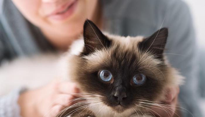 por qué ronronea un gato