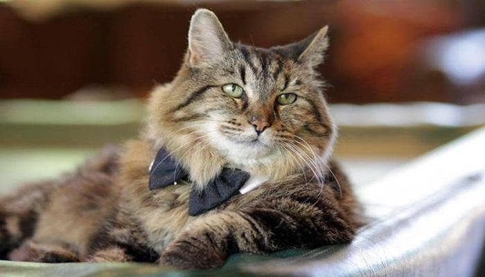 Que necesita un gato para vivir