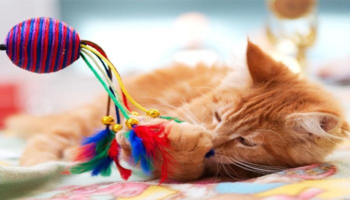 Que Necesita Un Gato Para Vivir 22 Datos Fundamentales