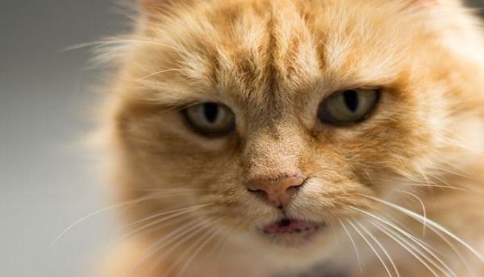 gato con lentigo simplex