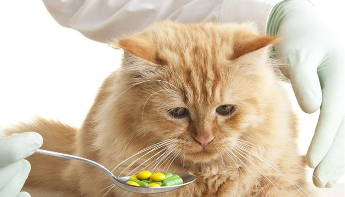 Medicinas para gatos