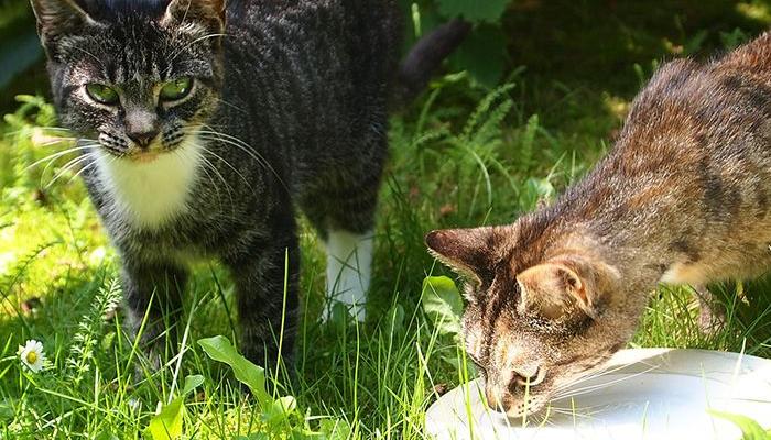 Gatitos alimentados