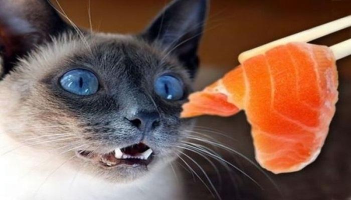 gatos que comen pescado crudo