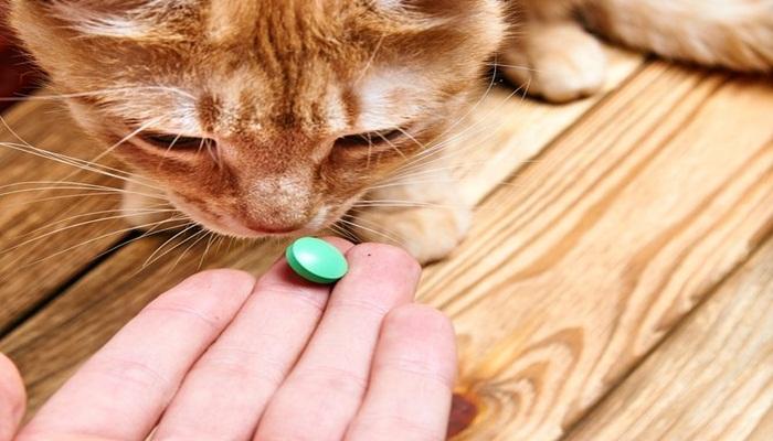sustancias dañinas para gatos