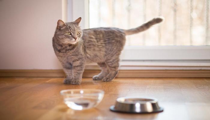 Alimentación para los gatos