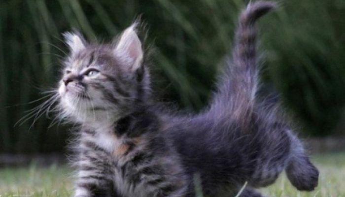 Colitas peludas de gatos