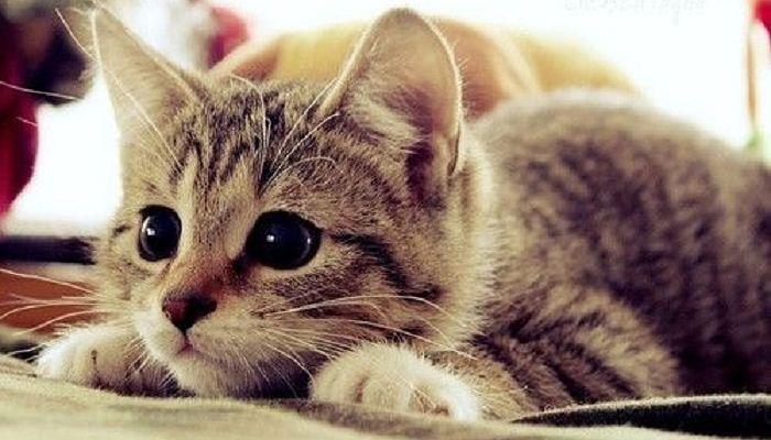 Pequeña nariz de gatos
