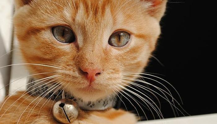 Bigotes de un tierno gatito