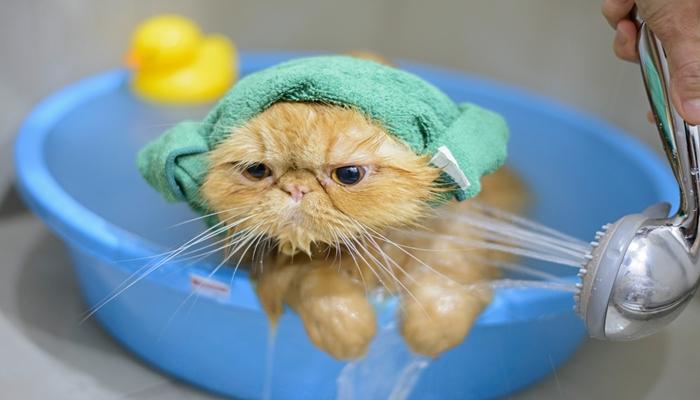agua cayendole a la cara del gato