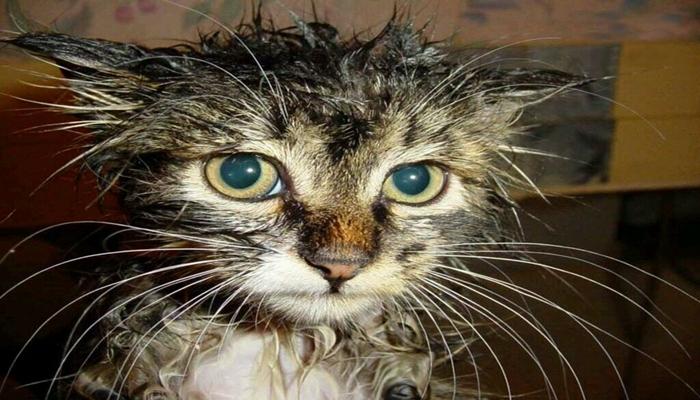gato con el pelaje sucio