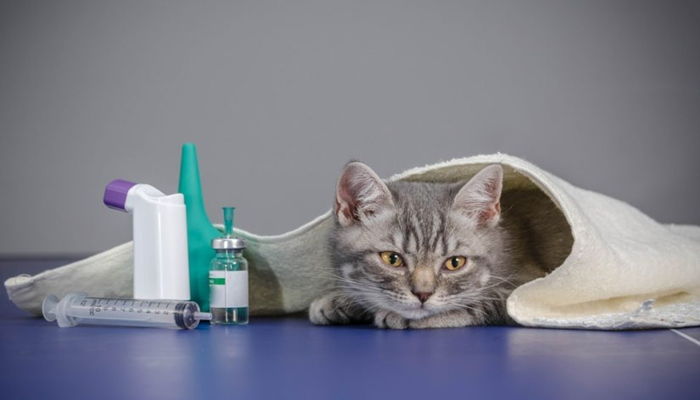 Mi gato está enfermo ¿Qué hago?