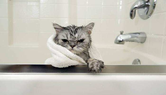 gato que no le agrada el baño