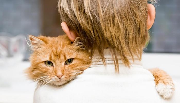 gato dominante sobre su amo