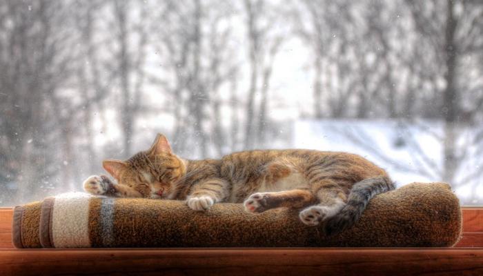 gato durmiendo sobre mantas