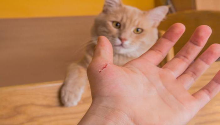Los gatos producen enfermedades
