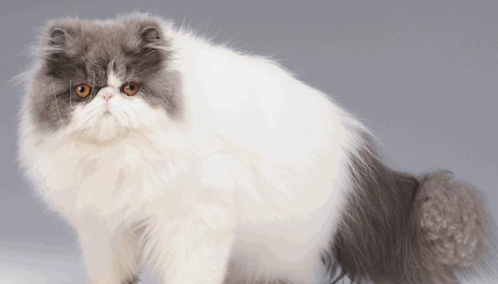 enfermedades que afectan a los gatos