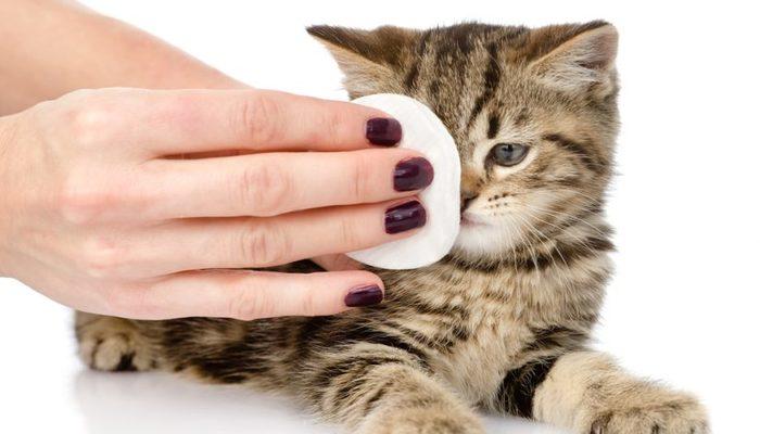 infección en los ojos de los gatos