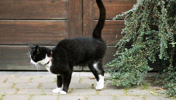 gato marcando territorio