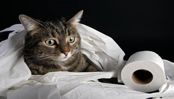 gato envuelto en papel higienico