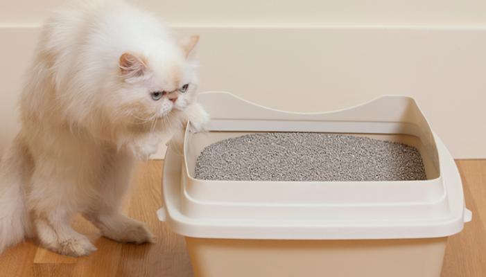 Gatos entrenando con la caja
