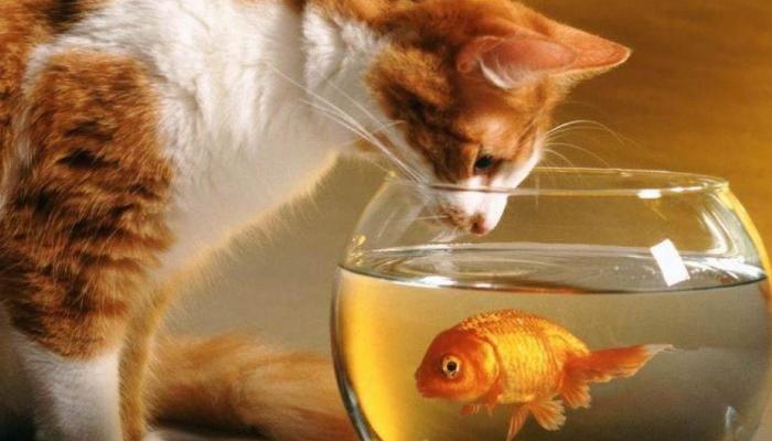 Gatos educados