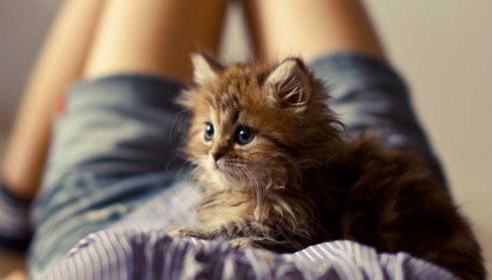 Los gatos causan esterilidad