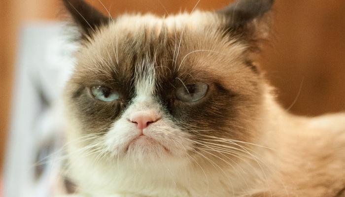 Irritabilidad del gato
