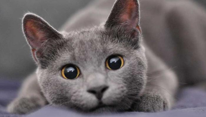 Minino de ojos grandes